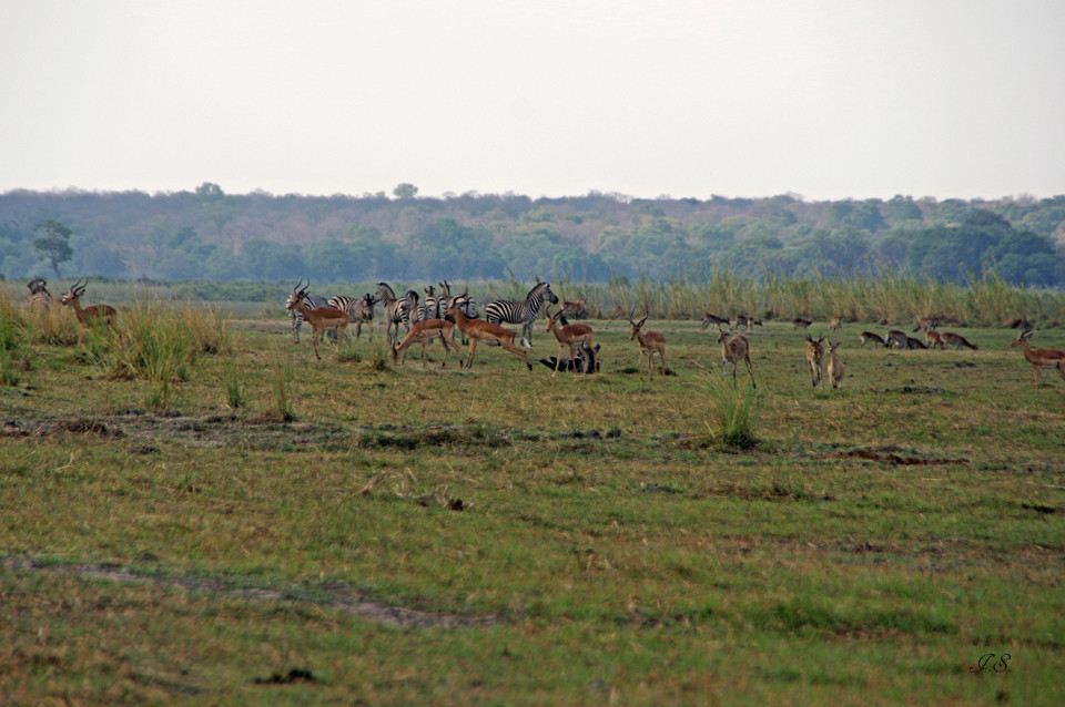 Mahango-Nationalpark