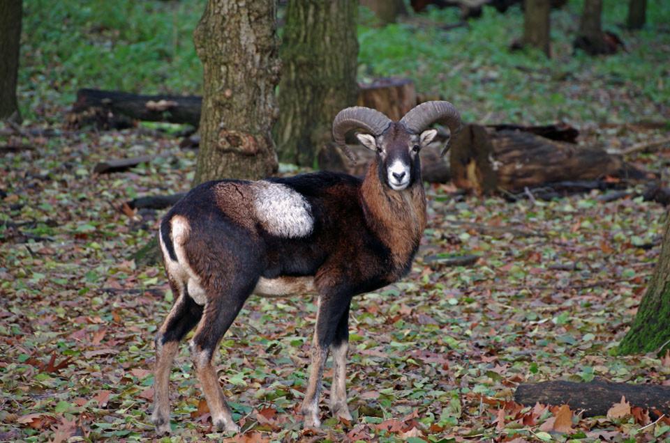Tiere des Wildparks