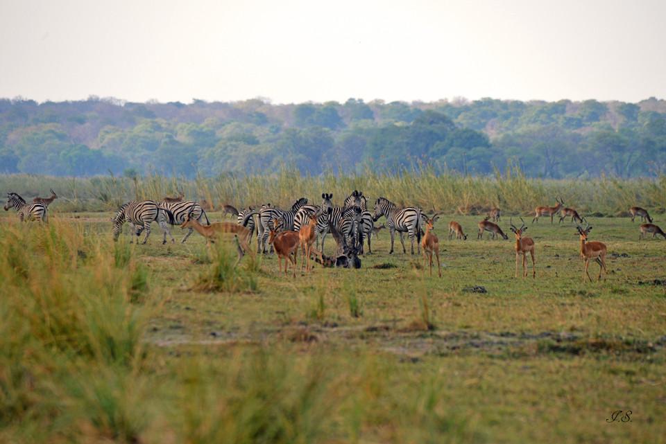 Mahango-Nationalpark