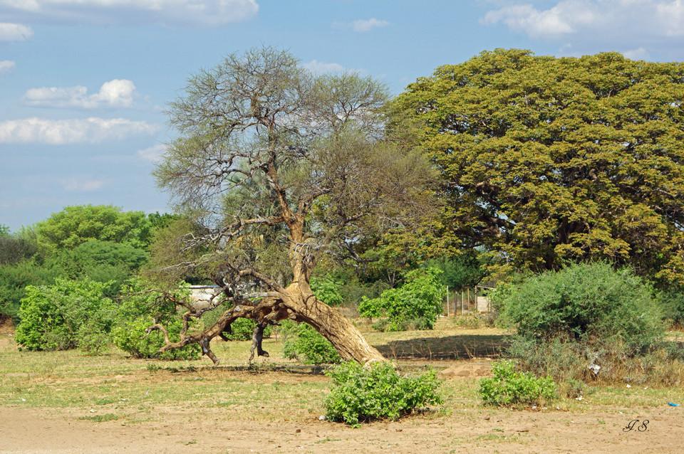 Landschaft nahe Vangu-Vangu