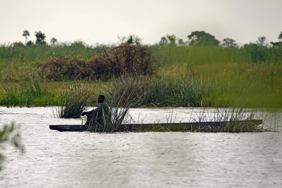 Okavangodelta, Fischer