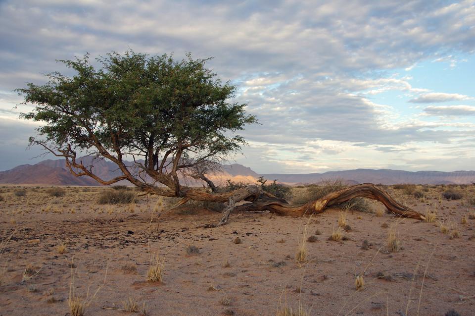 Sousesvlei Desert Camp
