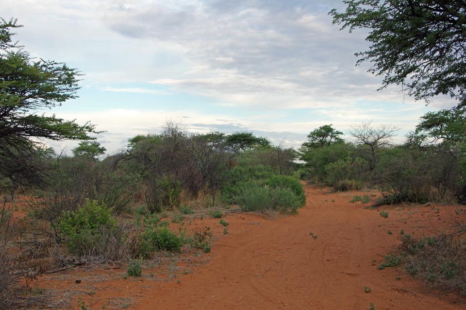 Buschmannland beim Ghanzi Trail Blazers-Camp
