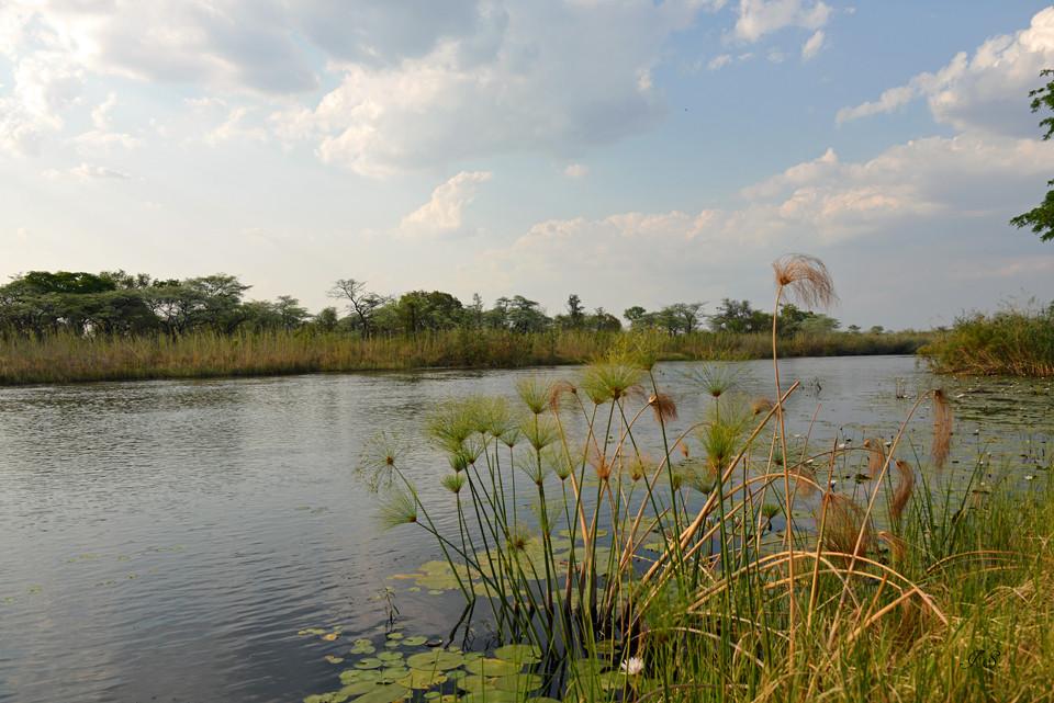 der Kwando- Fluss