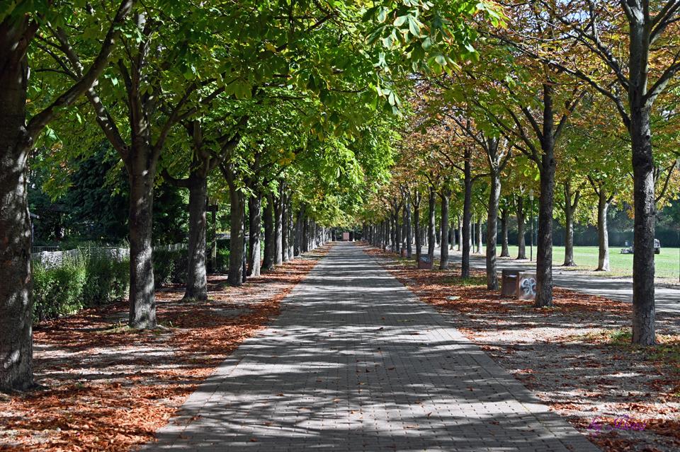 Friedenspark