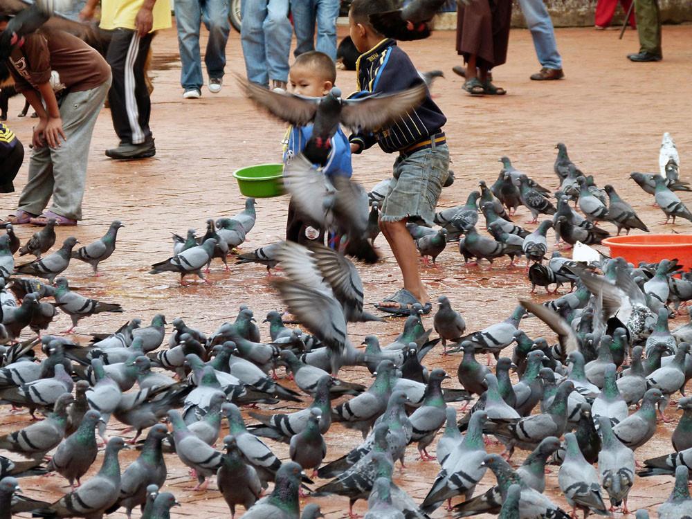 Tauben überall