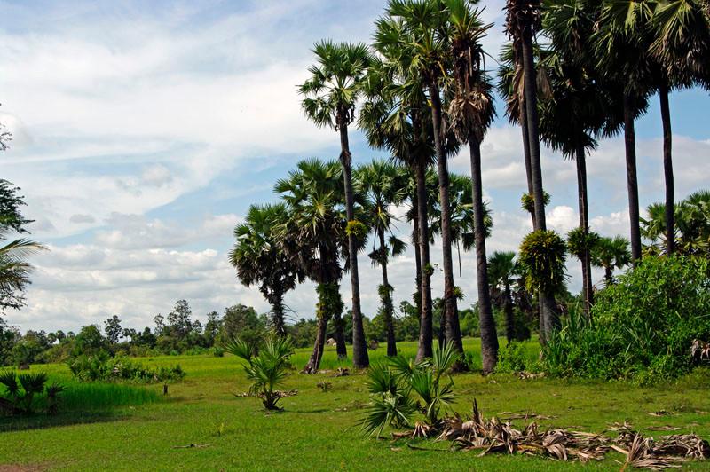 unterwegs in Angkor