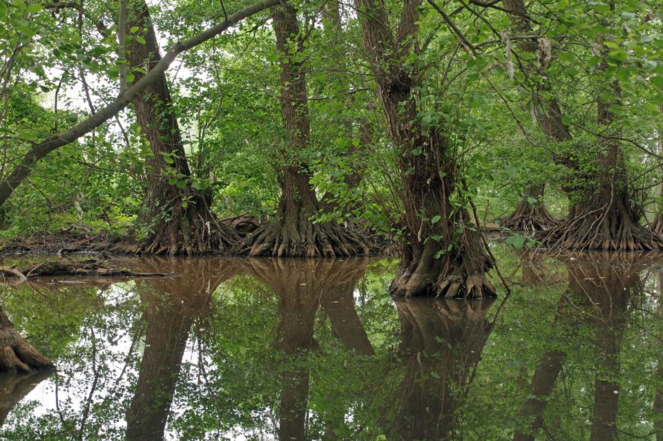 Pfälzer Mangroven