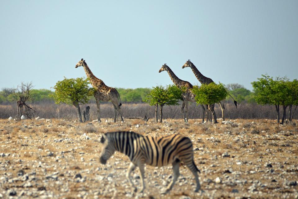Tierbeobachtung im Etosha-Nationalpark