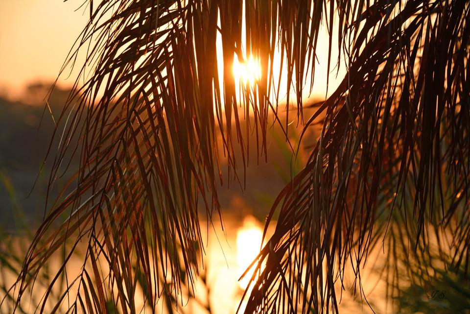 Ngepi-Camp, Sonnenaufgang