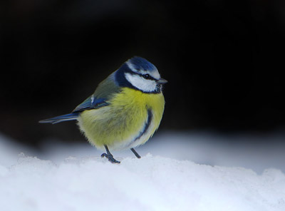 2. Stunde der Wintervögel