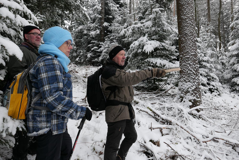 Höhlenbaumsuche im Schwarzspechtrevier