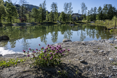 Biodiversitätstag am Fluebergweiher: Rückblick