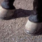 Pferdekoppeln bleiben auch vor dem Eingang bei Regen trocken und gatschfrei