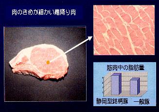 肉のきめが細かい霜降り肉