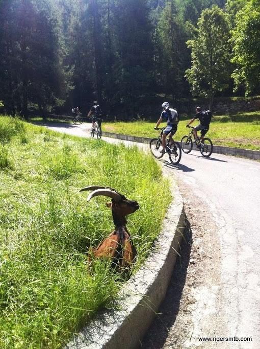 Max chiude la coda...(Max è quello in bici!)...