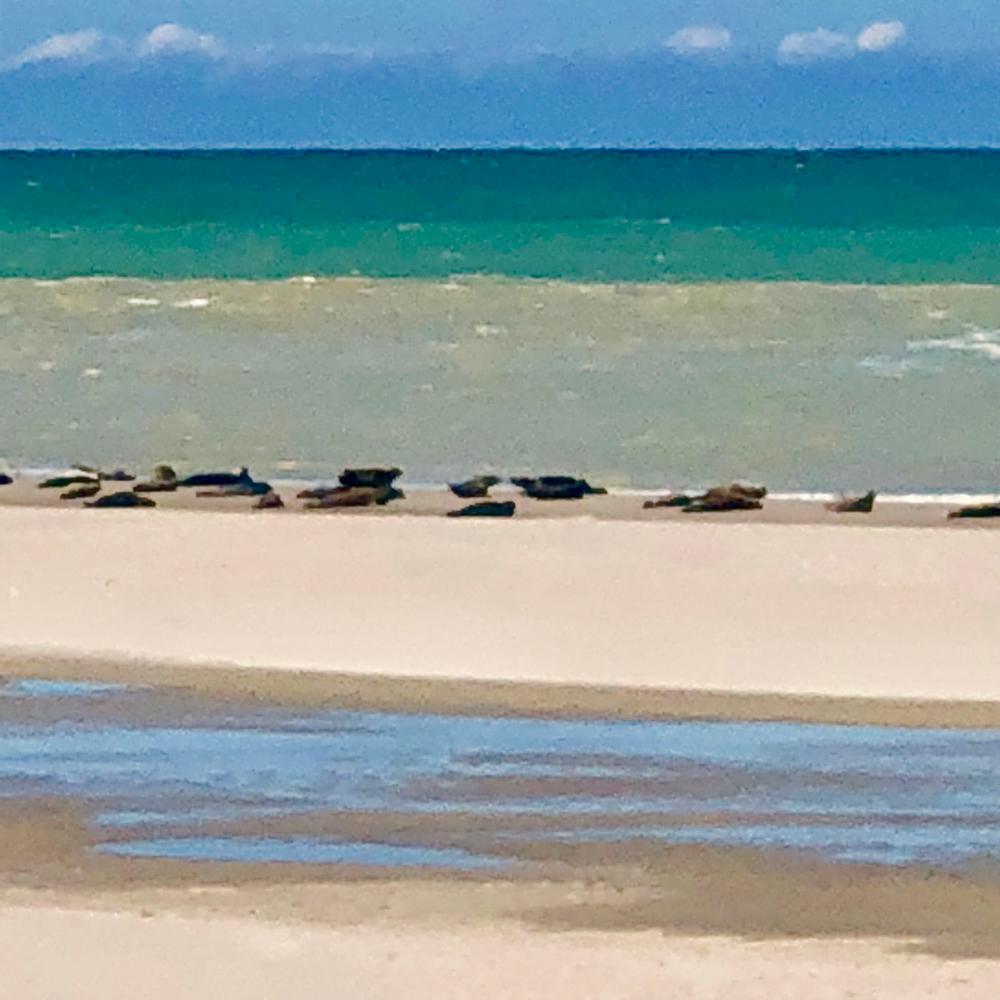 Die Seehundbank