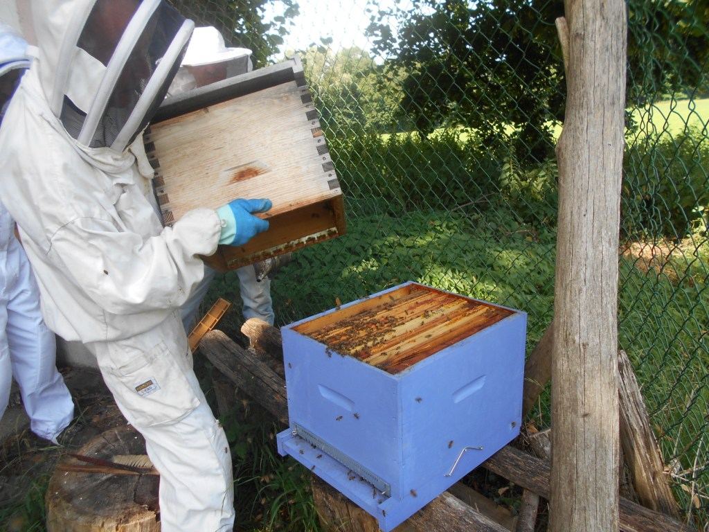 Bien secouer l'ancienne ruche sur la nouvelle afin de récupérer toutes les abeilles. Le pire serait de laisser la reine dans l'ancienne ruche !