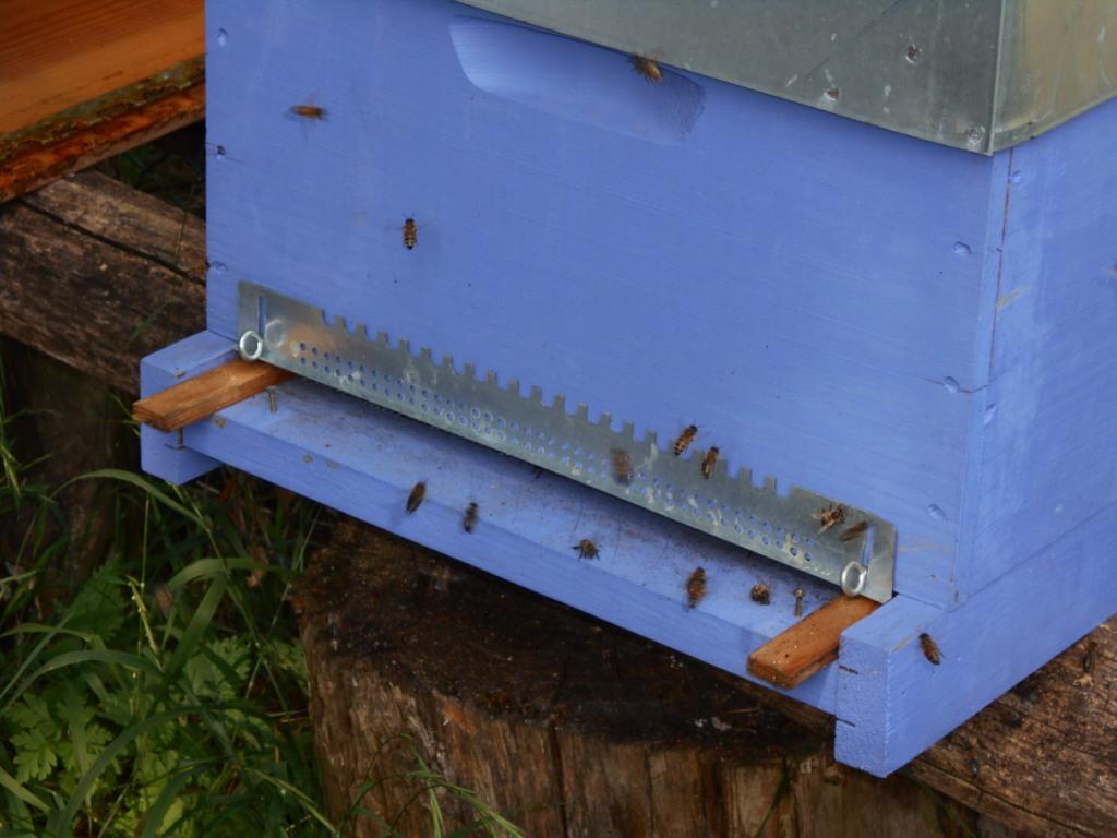 Les crochées à visser ne sont pas serrées. Marc a mis deux cales pour tenir la grille. La ruche a aussi été sanglée. Ainsi le jour j, il n'y a qu'à enlever ces cales et descendre la grille et serrer les crochets à visser.
