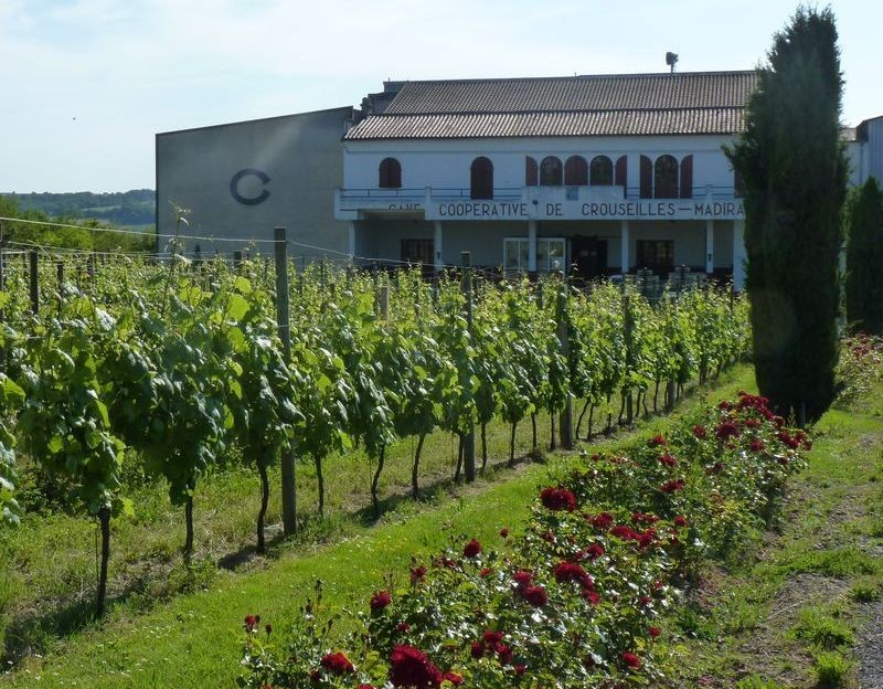 Wine circuit in the vineyard of Madiran and Pacherenc du Vic-Bilh