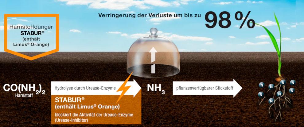 Limus Orange how STABUR® urease inhibitor urea works