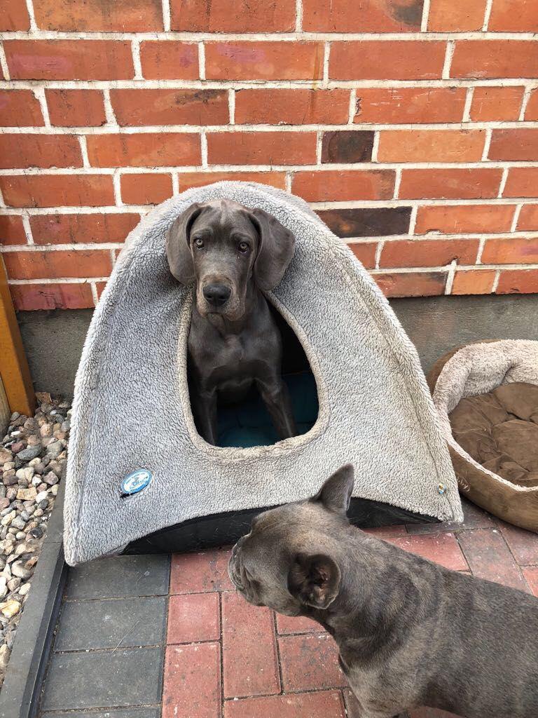 Greta findet die Höhle ihrer Jack-Russel-Freundin toll!