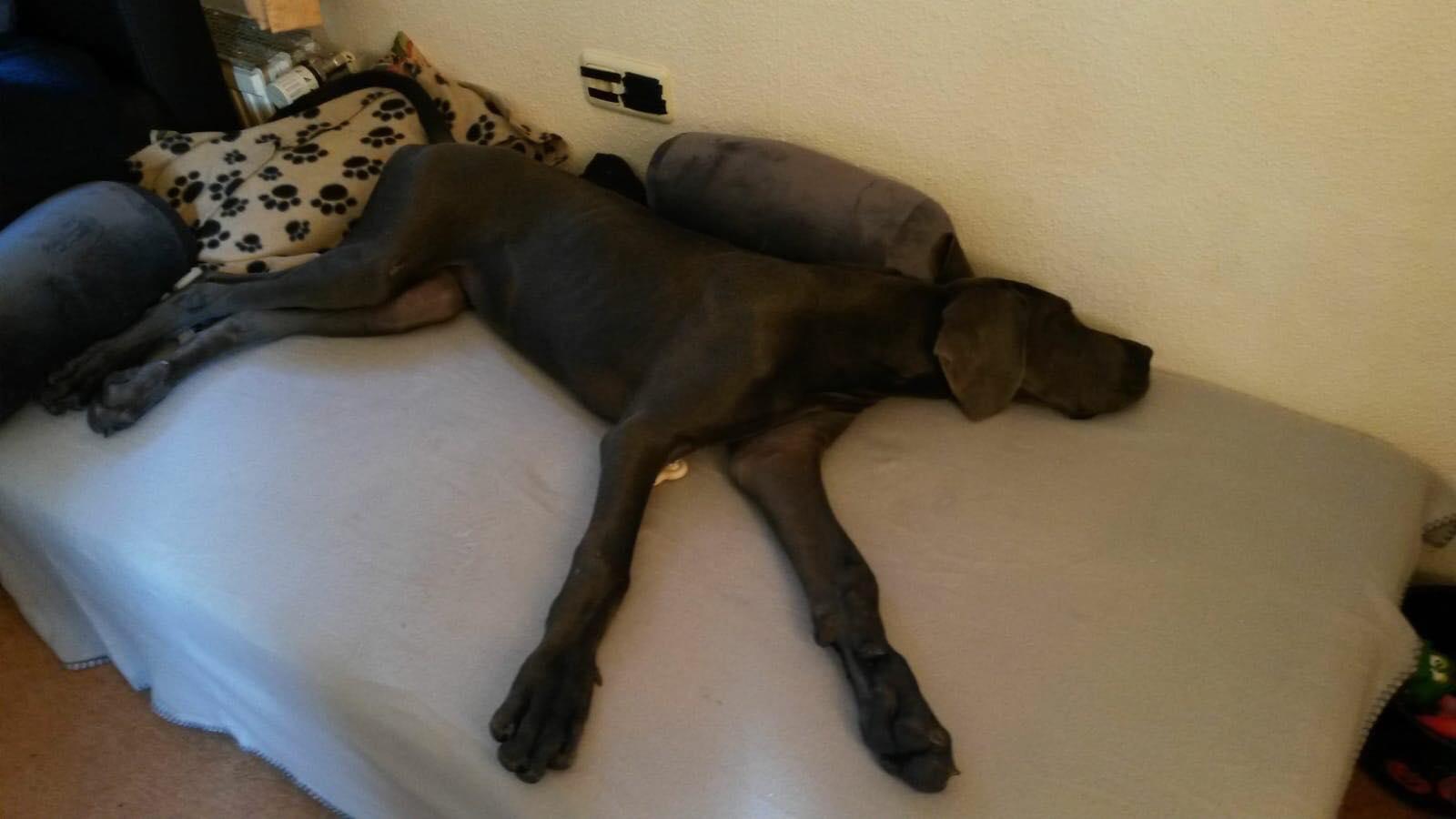 Luna hat's so richtig gut, sie hat von Herrchen eine eigene Couch bekommen :D