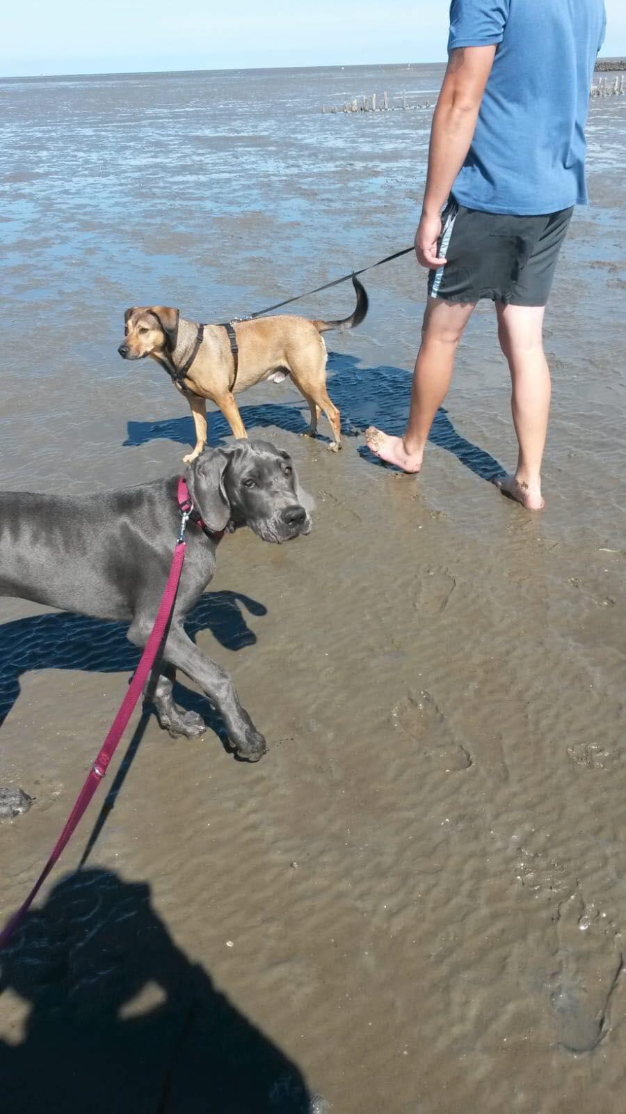 Luna war auch schon am Strand :-)