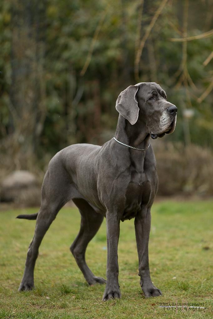 Amke, mein Herzenshund