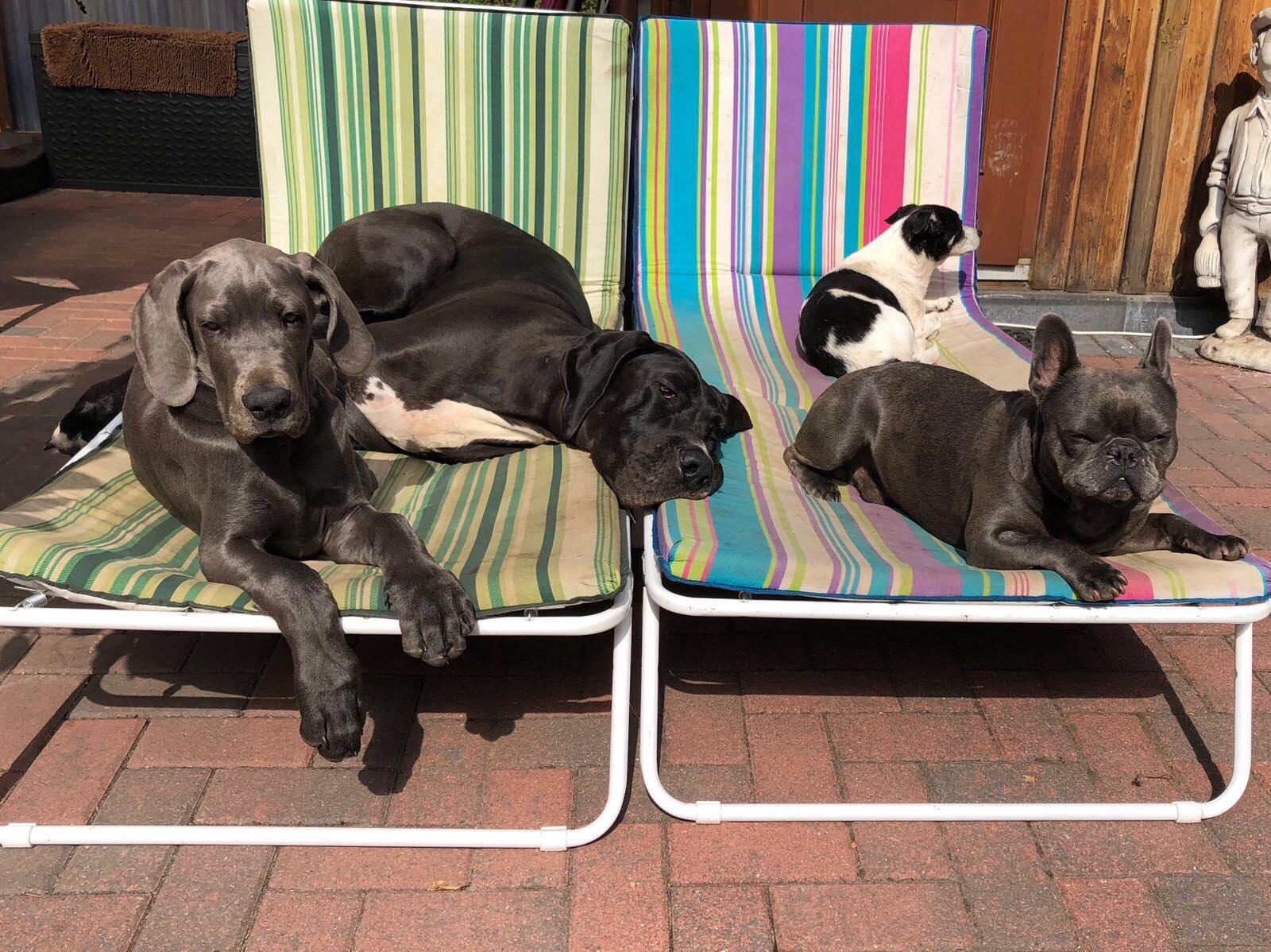 Greta und ihre neue vierbeinige Familie