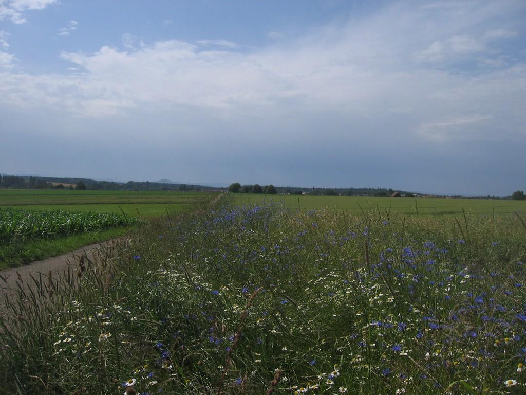 Kultur und Natur am Limeswanderweg