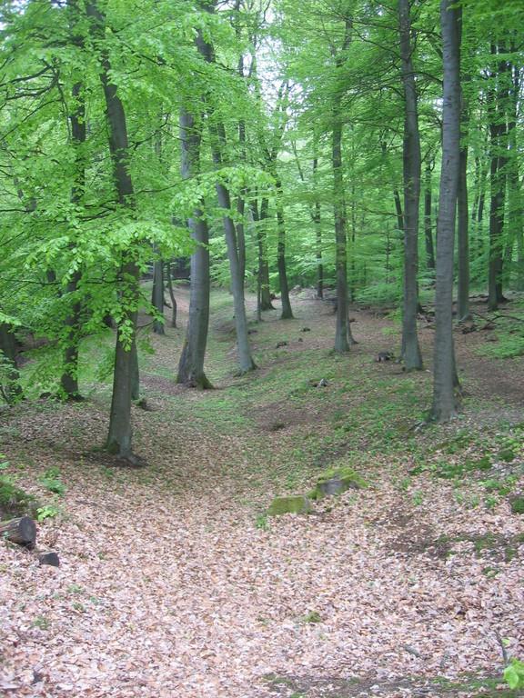 Limesgraben im Wald