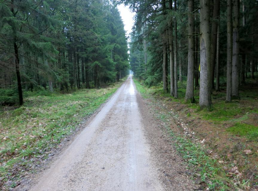 Dennenloher Forst