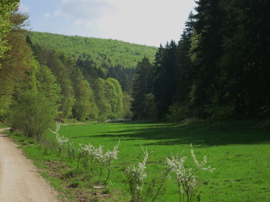 im Köschinger Forst (10 km Forstweg im Tal)