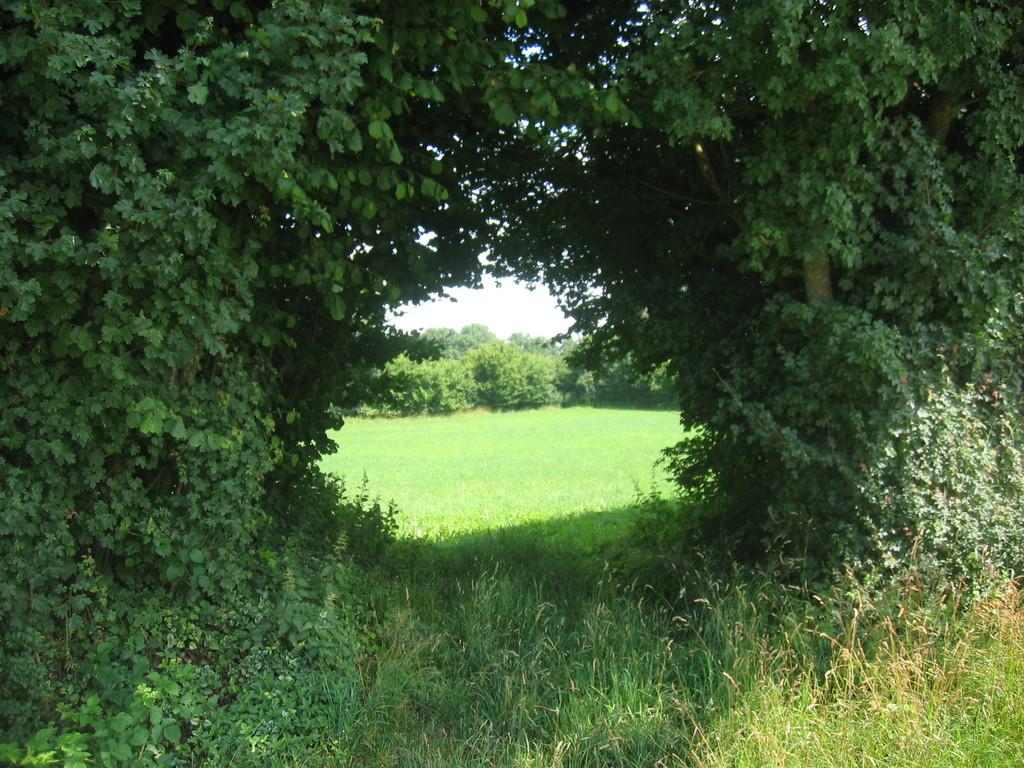 Grünes Tor vom Kastell Halheim