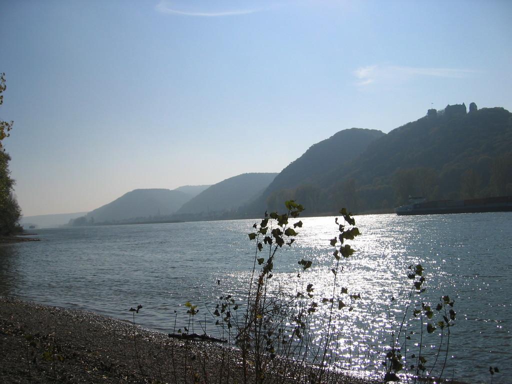 Rhein bei Rheinbrohl