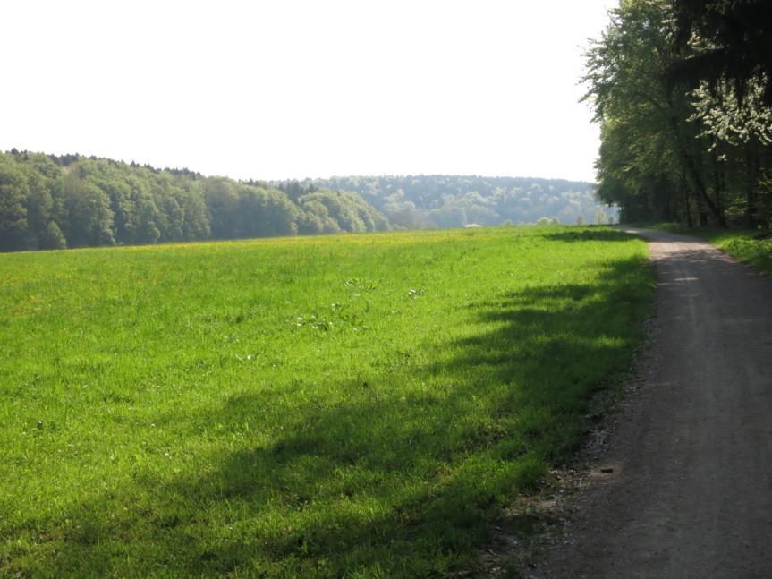 Richtung Köschinger Forst