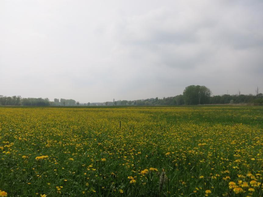 Hienheim