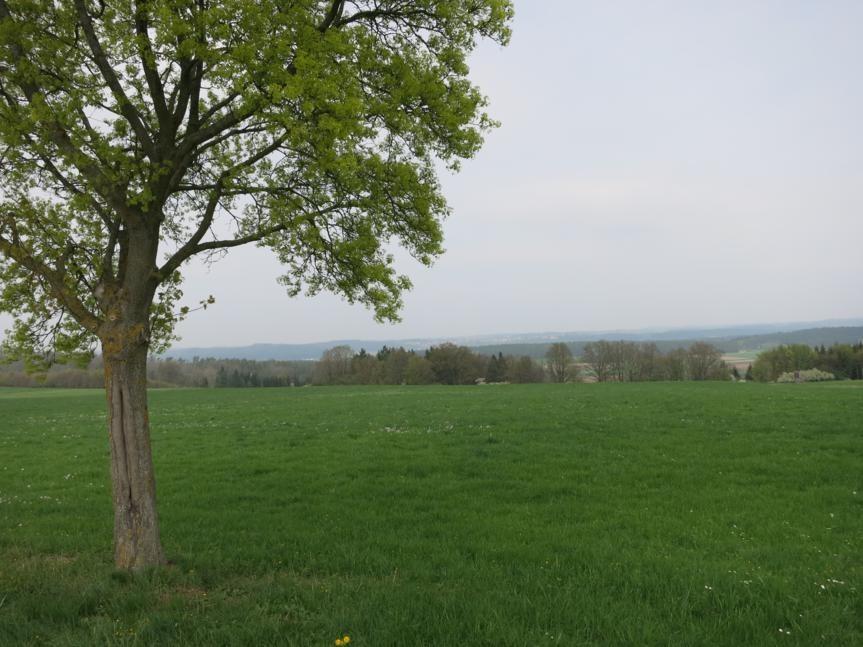 zwischen Pfofeld und Dorsbrunn