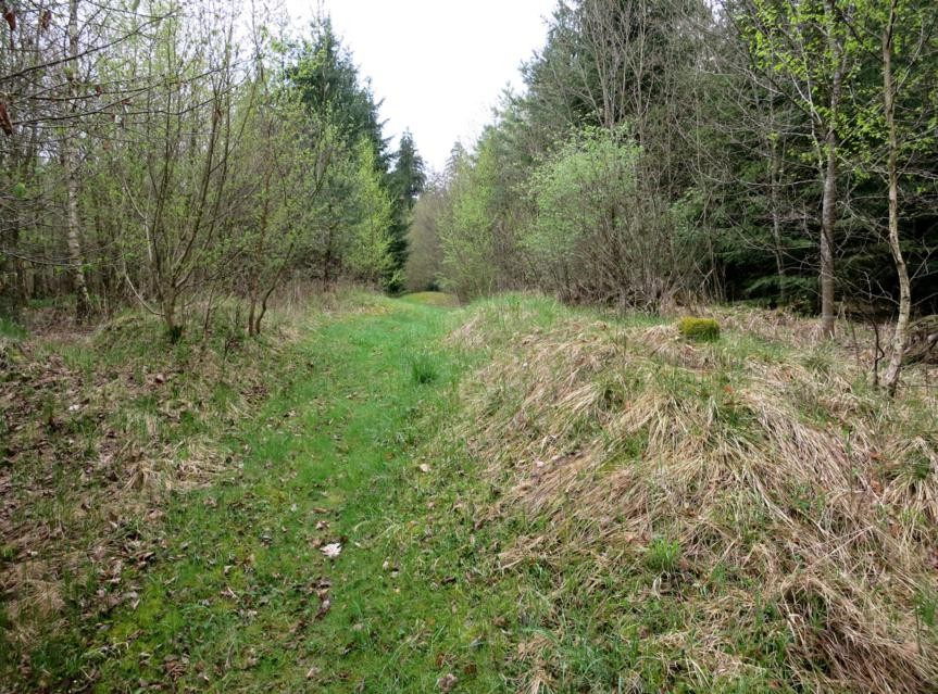 Limesverlauf im Weitlinger Forst