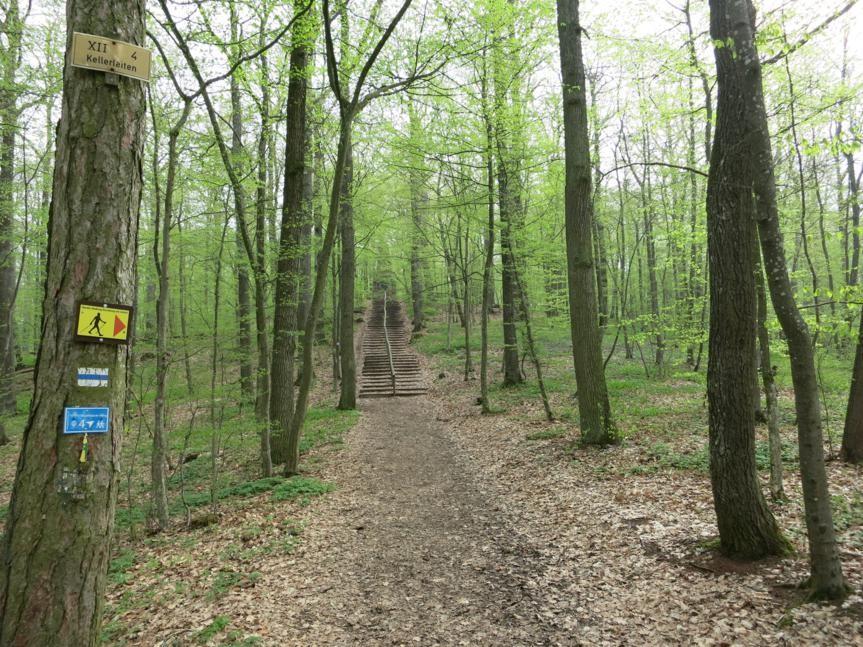 Aufstieg zum Bismarkturm (Gunzenhausen)