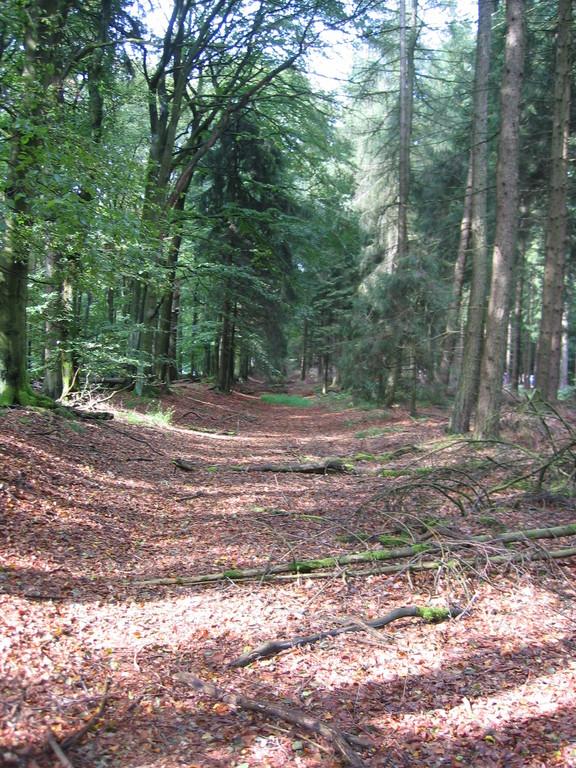 Limesverlauf im Wald nach Dasbach