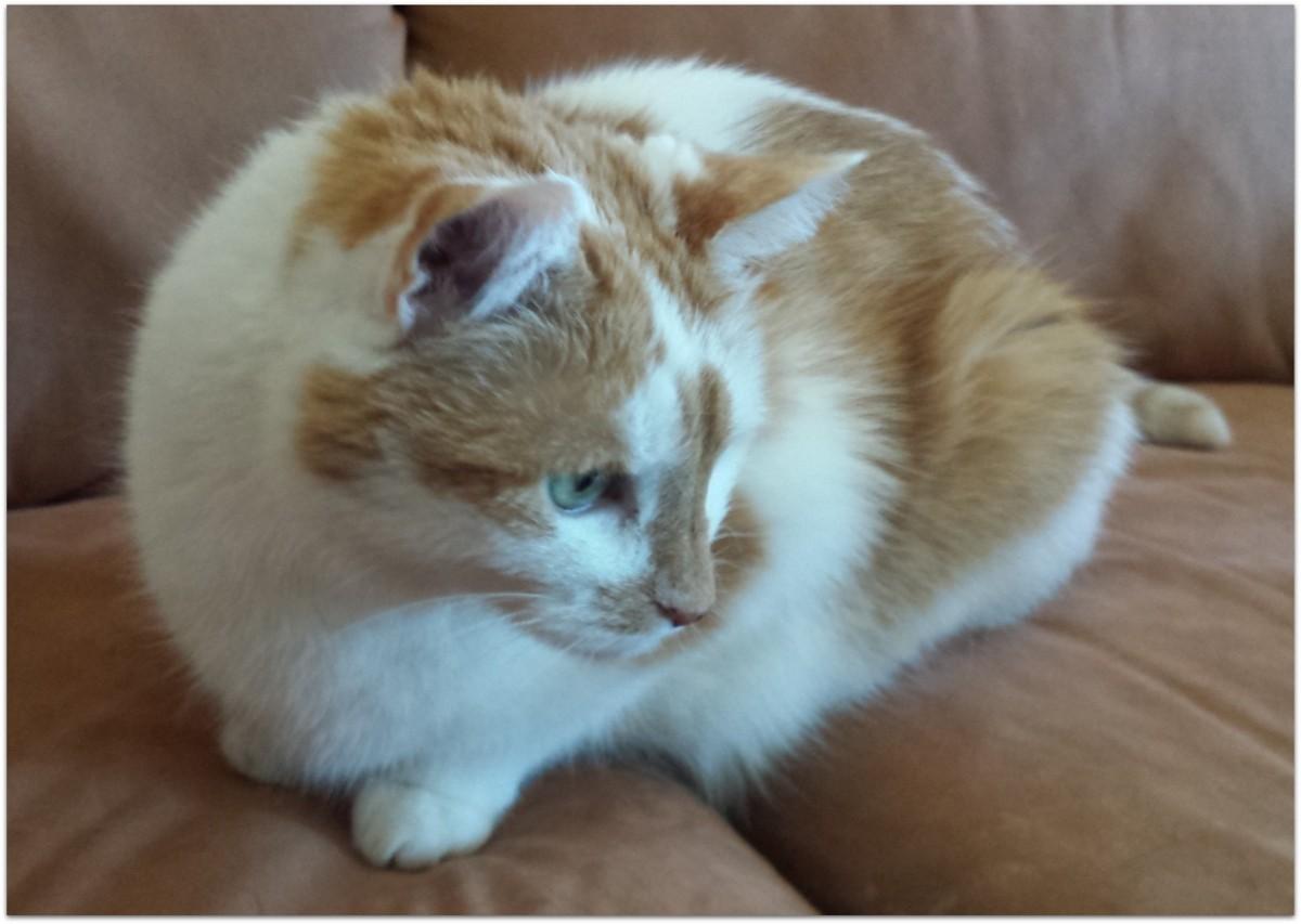Unsere Katzen - dolleboxers Webseite!