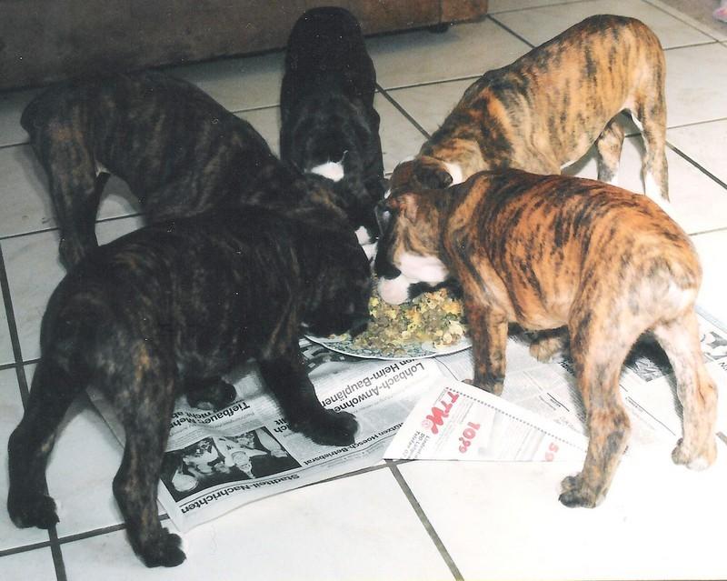 Chica und ihre Geschwister bei der Fütterung