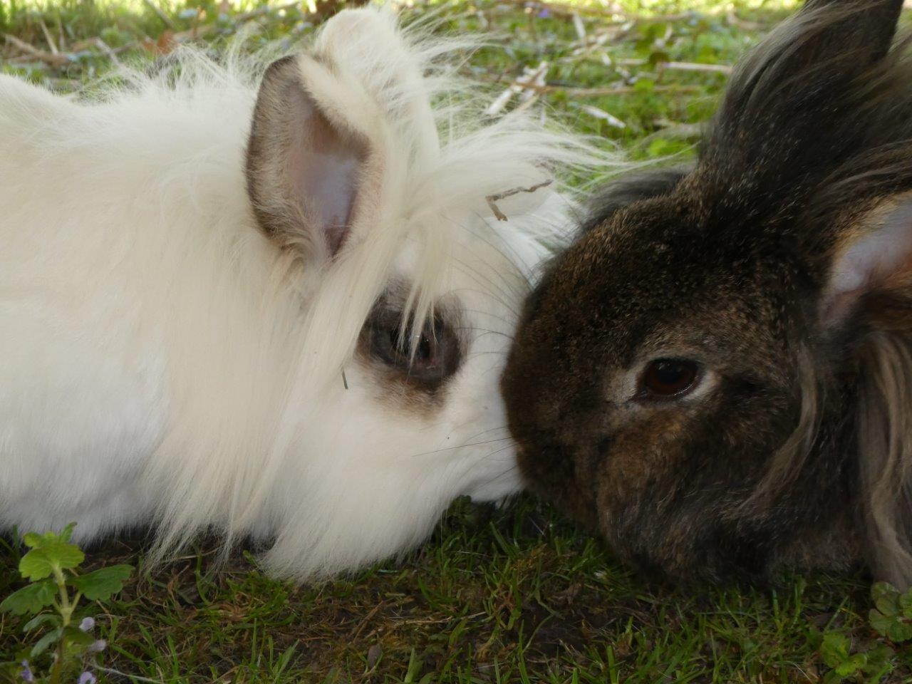 Die Kaninchen Emil und Paul