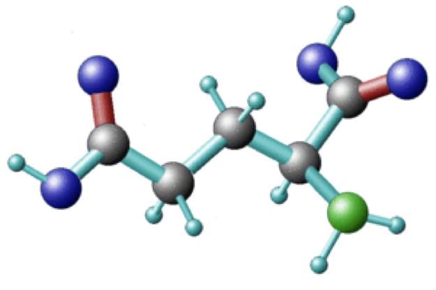 Aminosäuren - Eigenschaft und Wirkung als Bausteine der Körperproteine