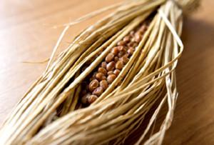 納豆の免疫力効果―免疫力向上生活
