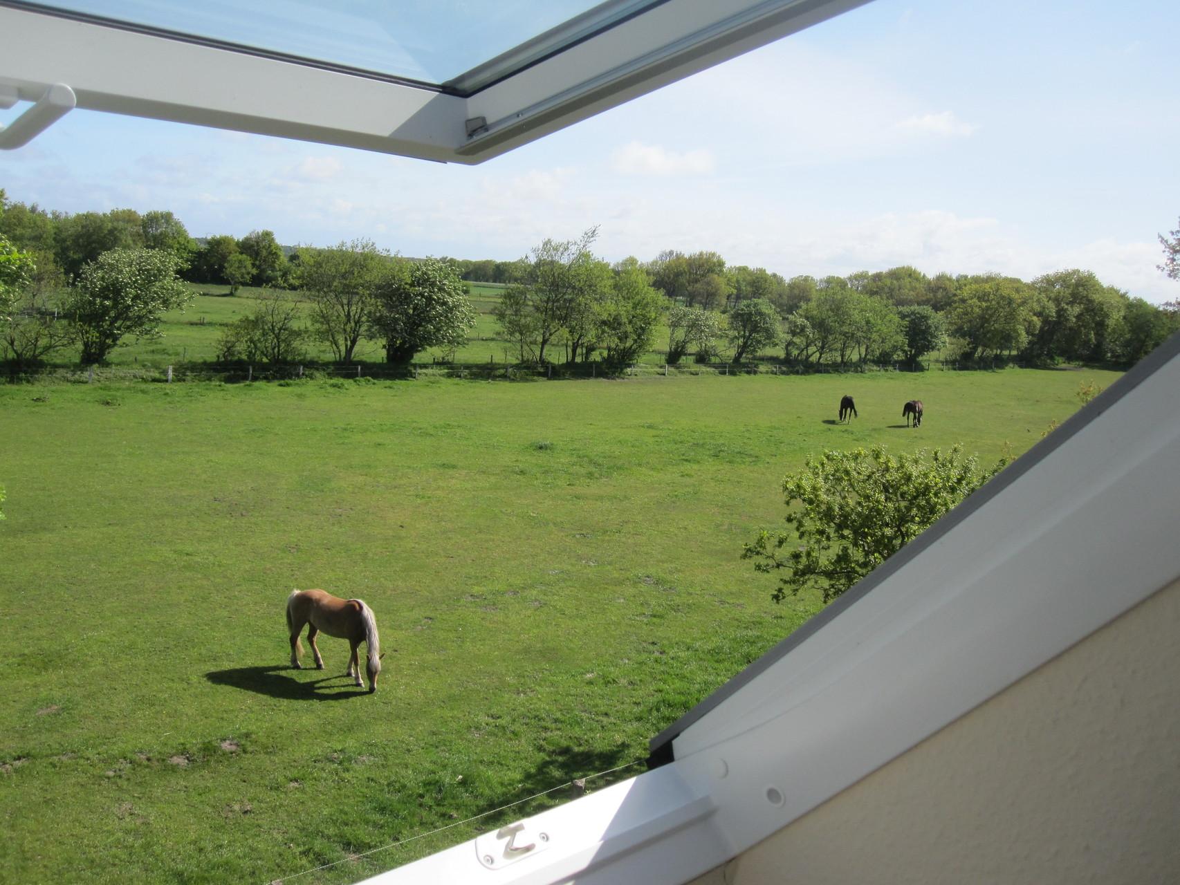 Blick auf die Pferdewiese