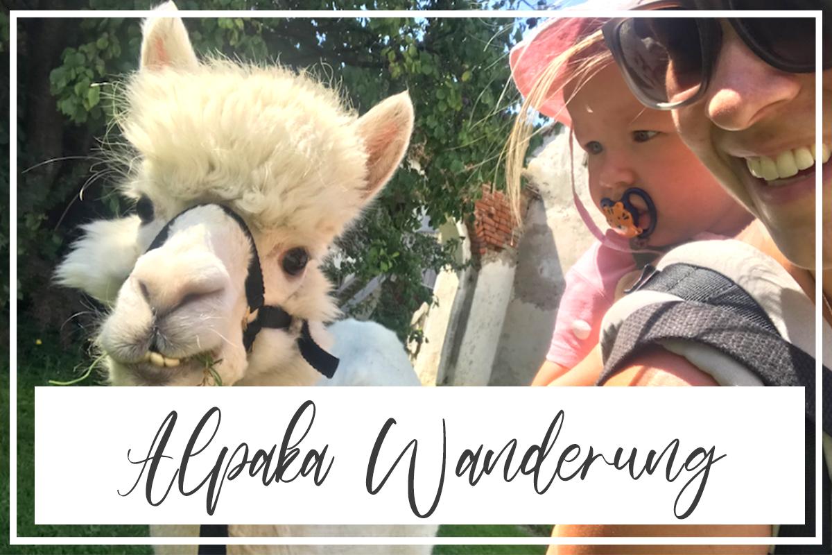 Alpaka Wanderung | BGLD, STMK