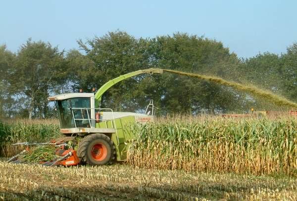 ensilage du maïs